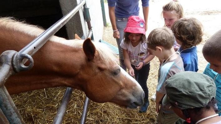 Les élèves découvrent l'alimentation du cheval :
