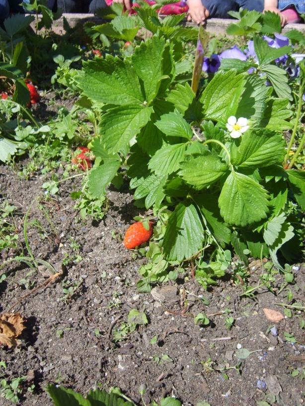 Petit coin de jardinage