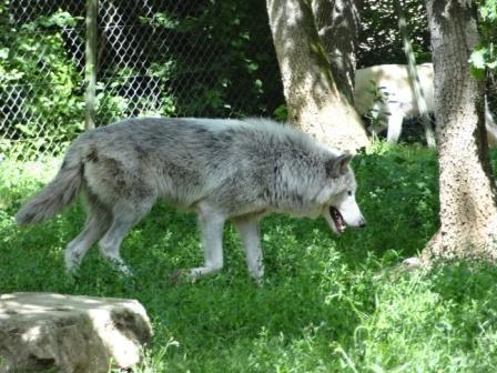 Sortie au Zoo de Plaisance du Touch